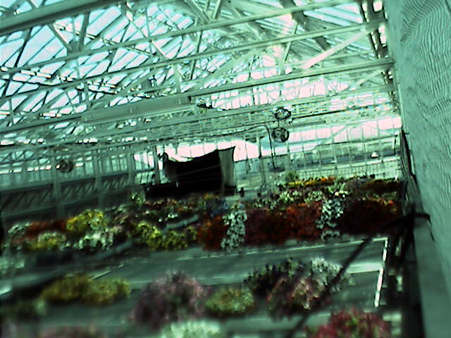 Cornell University - Greenhouse