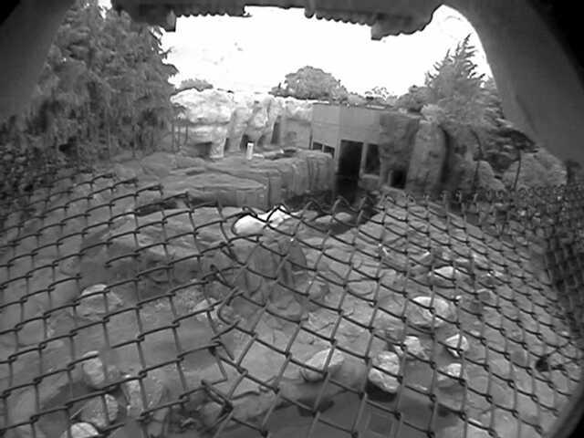 Toledo Zoo - Polar Bear Cam