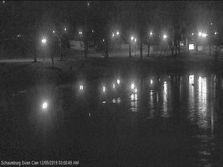 Schaumburg Swan Cam from Robert O. Atcher Municipal Center