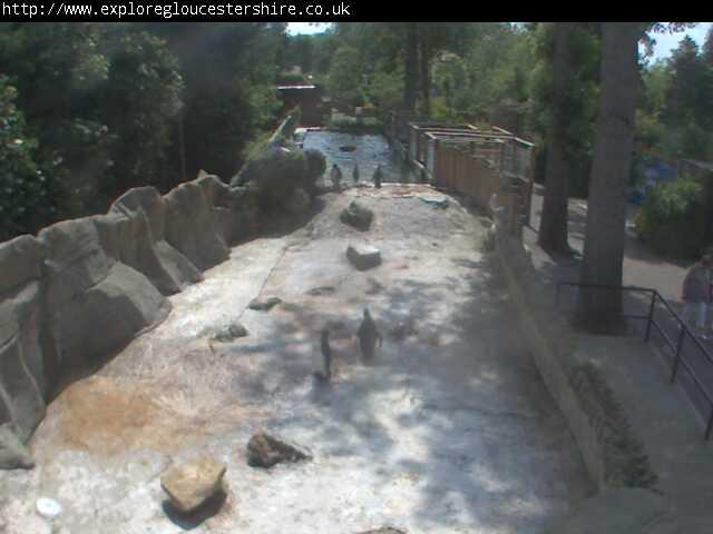 Birdland Park & Gardens - Penguin Cam