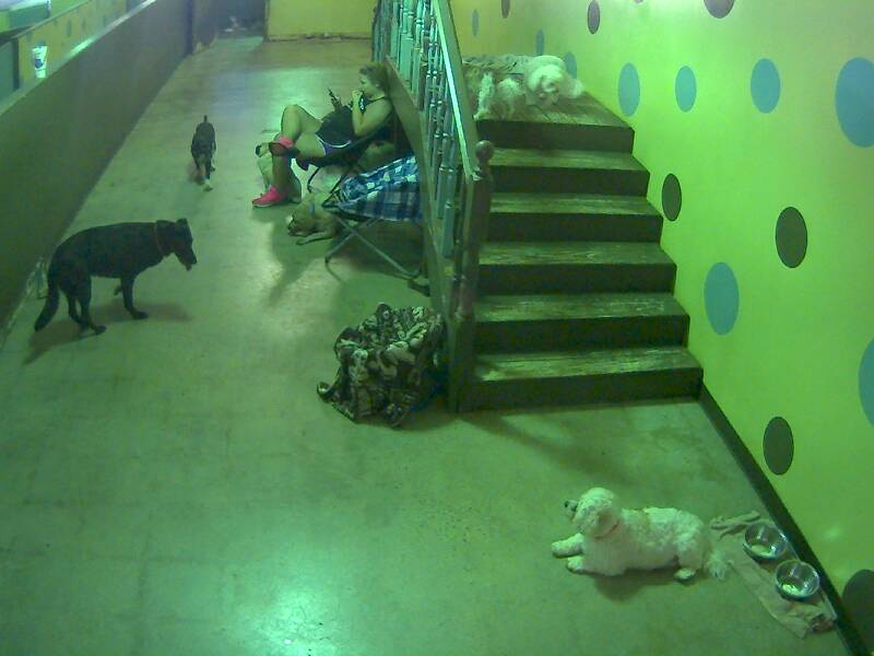 'My Three Dogs' Doggie Daycare