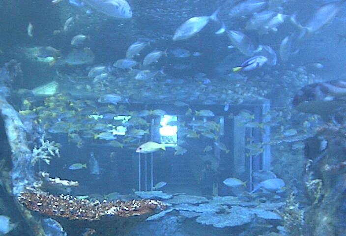 ????? Toba Aquarium