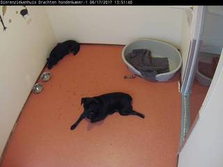 Drachten Animal Hospital